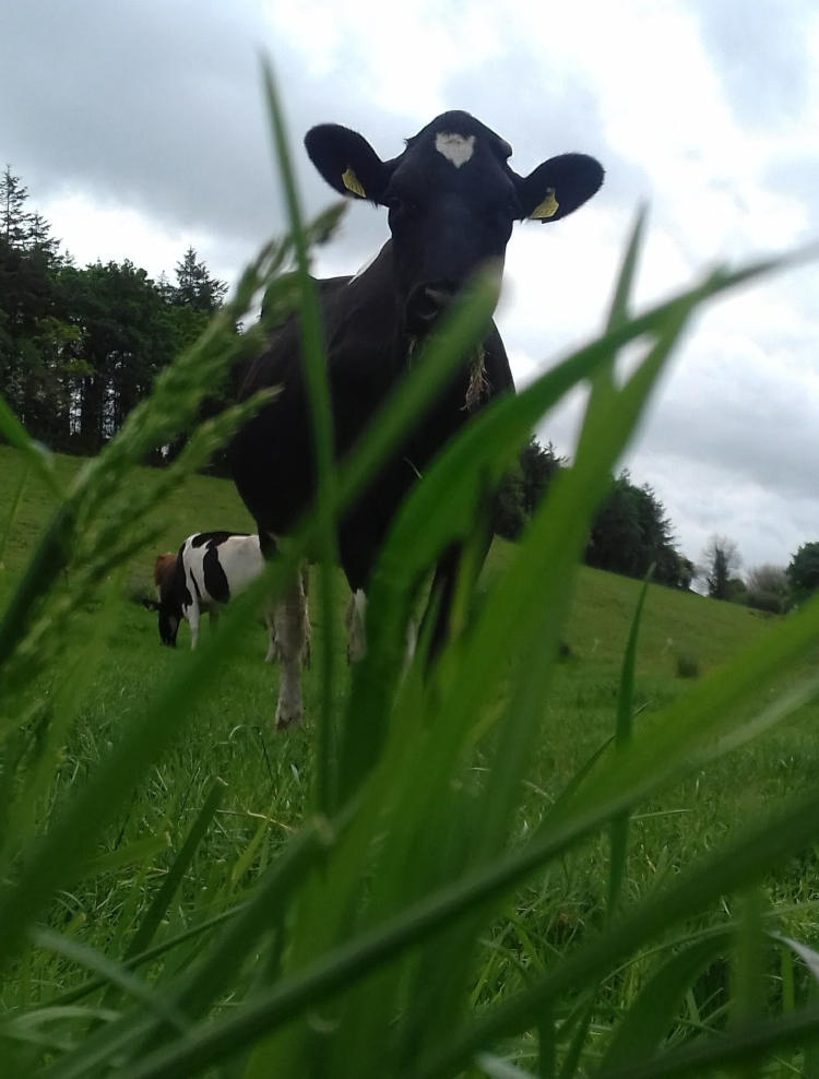grass foreground